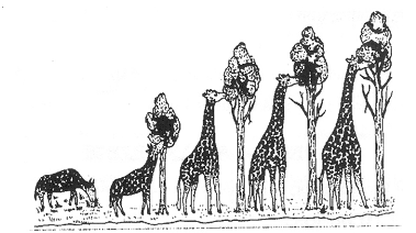 Theory Of Evolution: Theory Of Evolution Giraffe