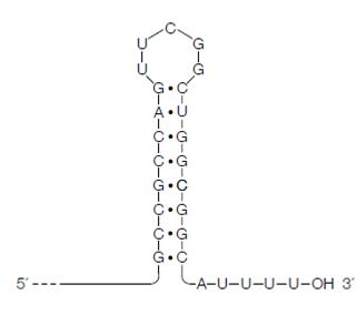 RNA Processing, Transcription in Prokaryotes, Assignment Help