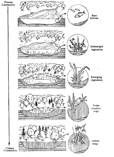 Pond Ecosystem Coloring Page Coloring Pages