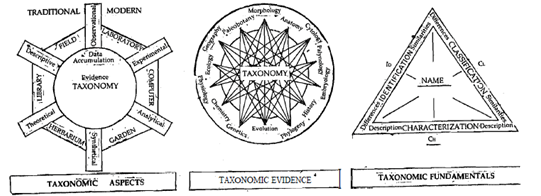 What do you mean by taxonomist, Biology