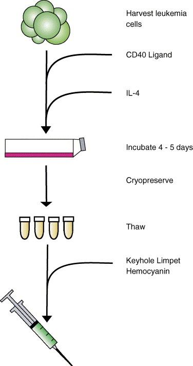 Failure to define window of time for autologous tumor