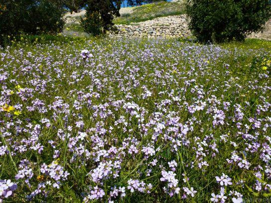 Wildflowers galore!