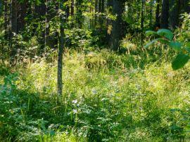 walkinwoods (3 of 10)