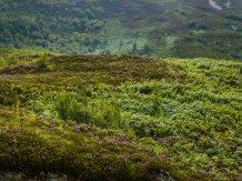 Every Highland heath.