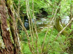 In Glencoe Wood.