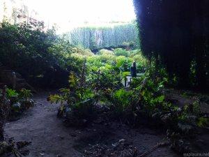 Nikky in the secret garden!