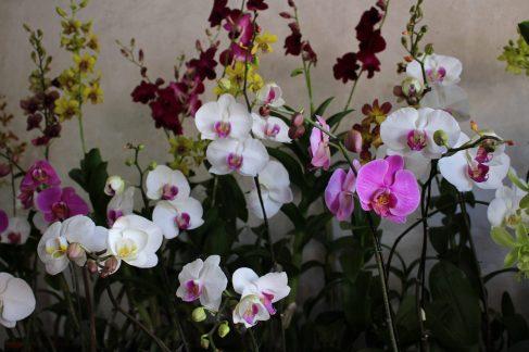 voyage-indonesie-bali-orchidee