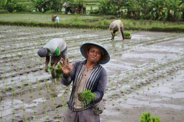 voyage-indonesie-bali-sidemen-rizieres1