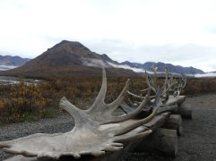 denali-national-park-21