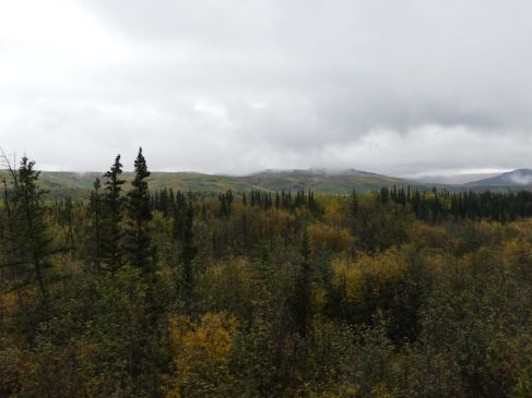 train-fairbanks-denali-41