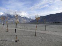 voyage-pakistan-gilgit-baltistan-randonnee-village-nangsoq (4)