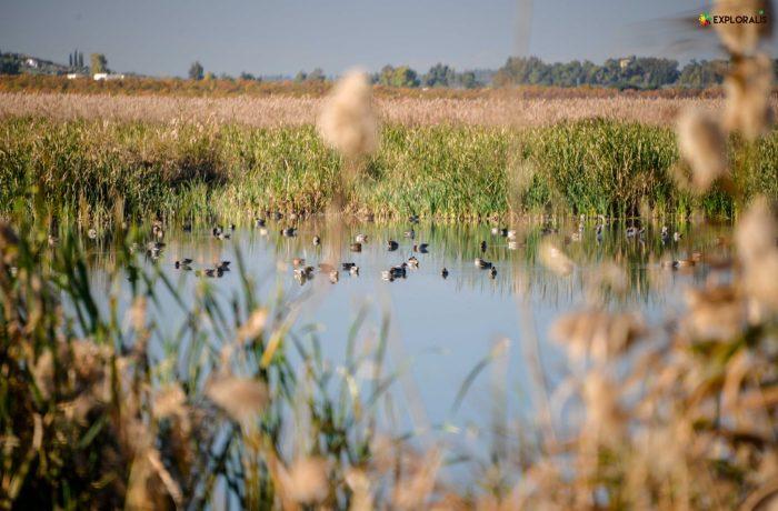 47 espèces migratrices hivernantes observées autour du fleuve Medjerda