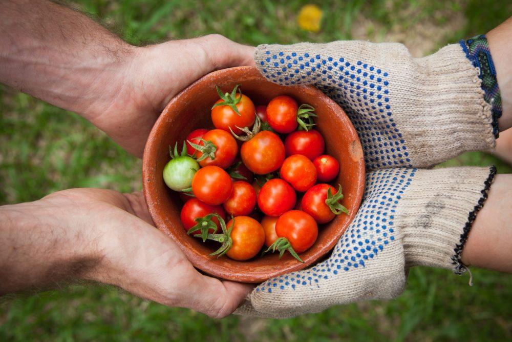 un pot de tomates passe d'une main a une autre