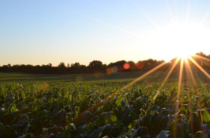 Production agro alimentaire et biodiversité associée
