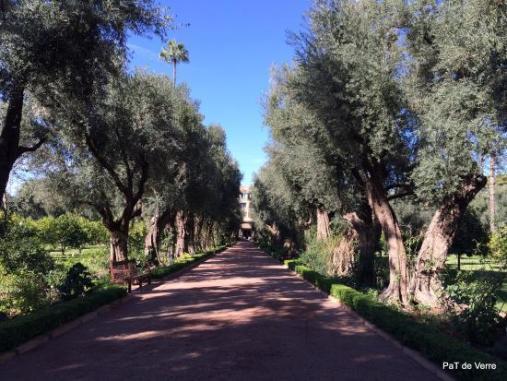 l-allee-des-oliviers