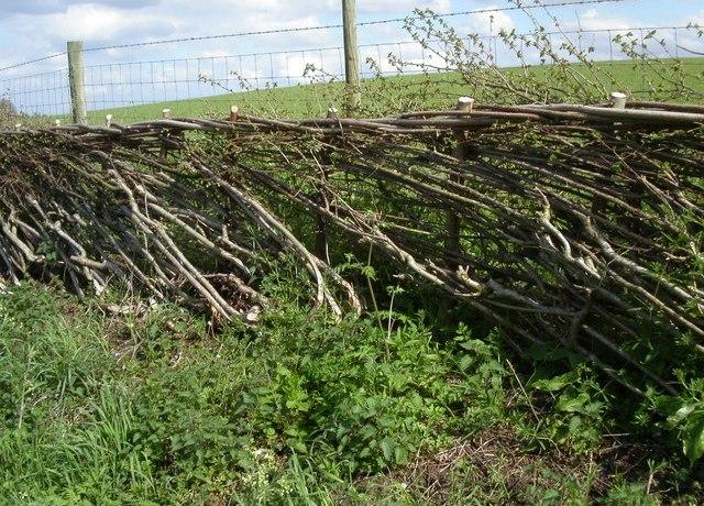 La haie de Benjes: hedgelaying