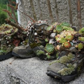 Row of old walking boots on a wall with flowering succulent flowers planted in them.