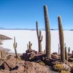 Salar de Uyuni Isla del Pescado