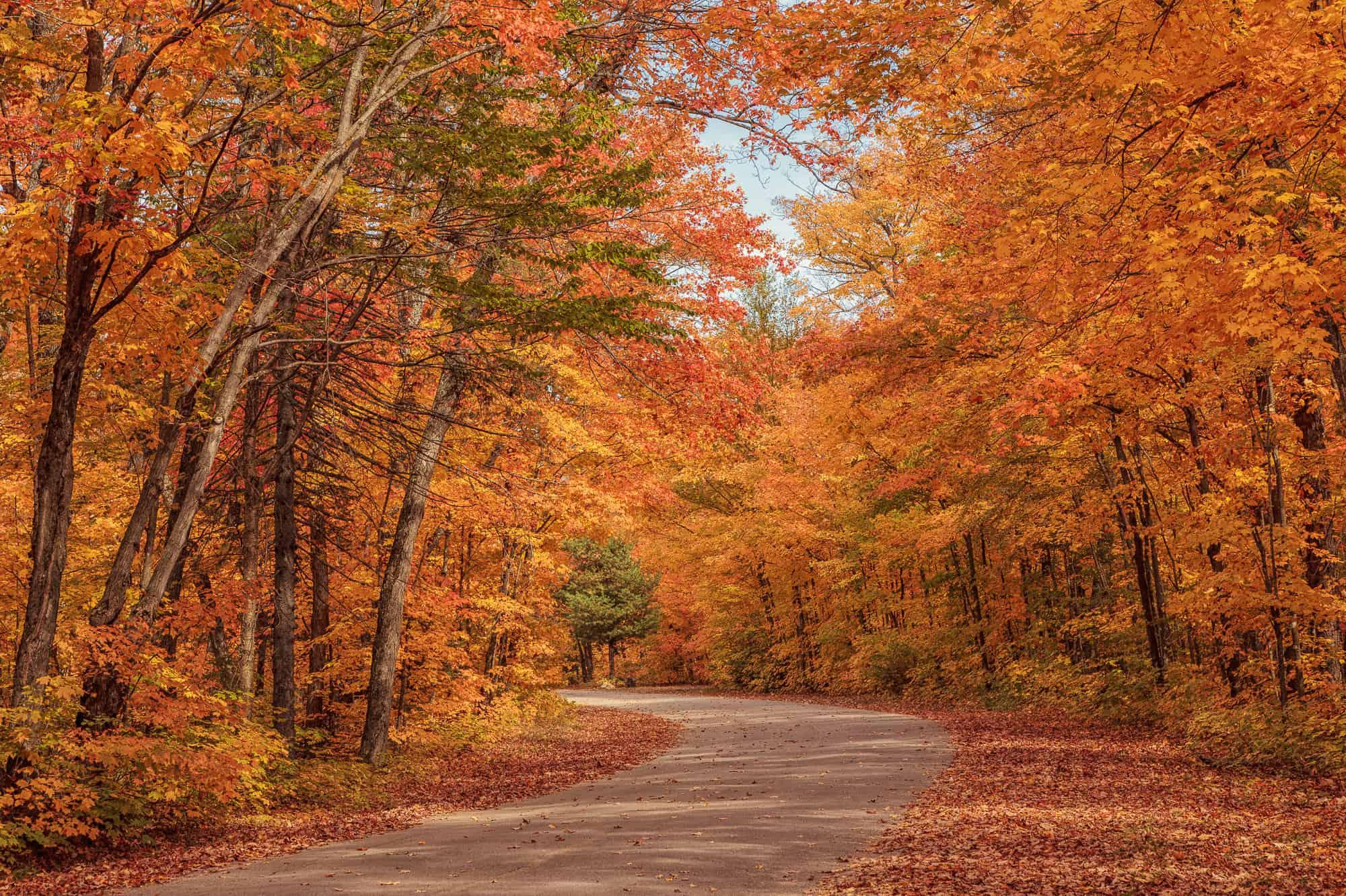 Central Park Fall Desktop Wallpaper Algonquin Provincial Park 3 Essential Hikes Explore