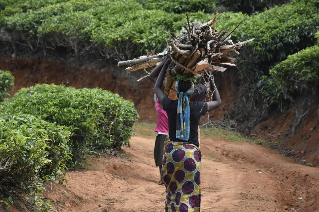 women fetching firewood