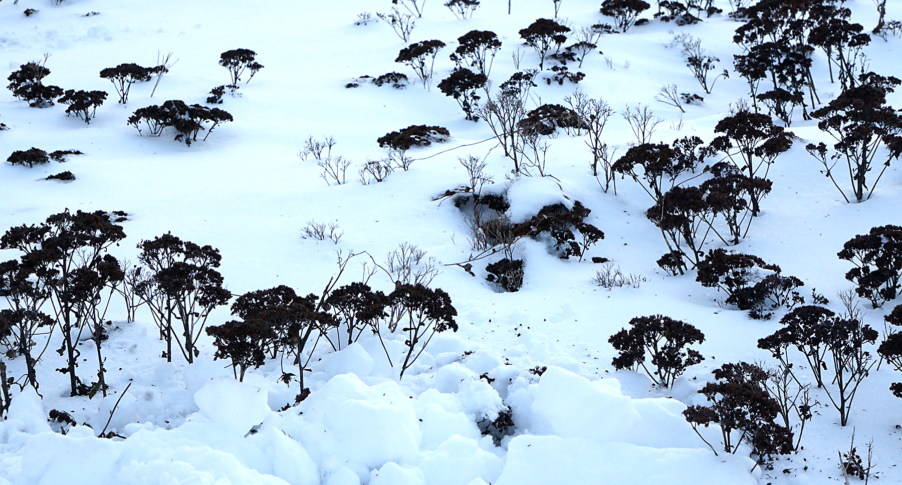 I love how these little seed heads poking out of the snow resemble a landscape of trees blanketed in snow.