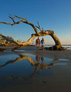 Driftwood beach on jekyll island also official georgia tourism  travel website explore rh exploregeorgia