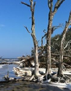 Driftwood beach jekyll island ga also beaches glory great dunes rh explorejekyllisland