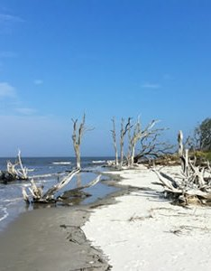 Jekyll island beaches also guide the official website of and rh explorejekyllisland