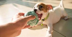 A Detailed Complete Guide To Choose Toys For Dogs