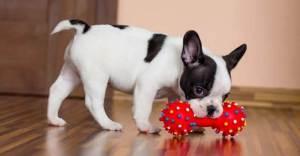 What Kind Of Dog Toys Should I Get?