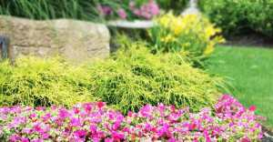 Choosing Shrubs And Plants