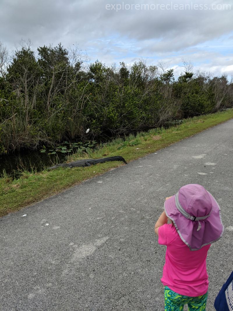 alligators in us national parks