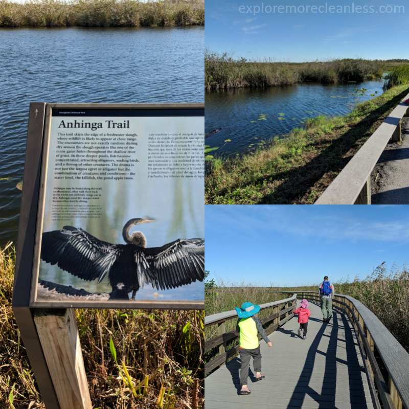 anhinga trail everglades florida