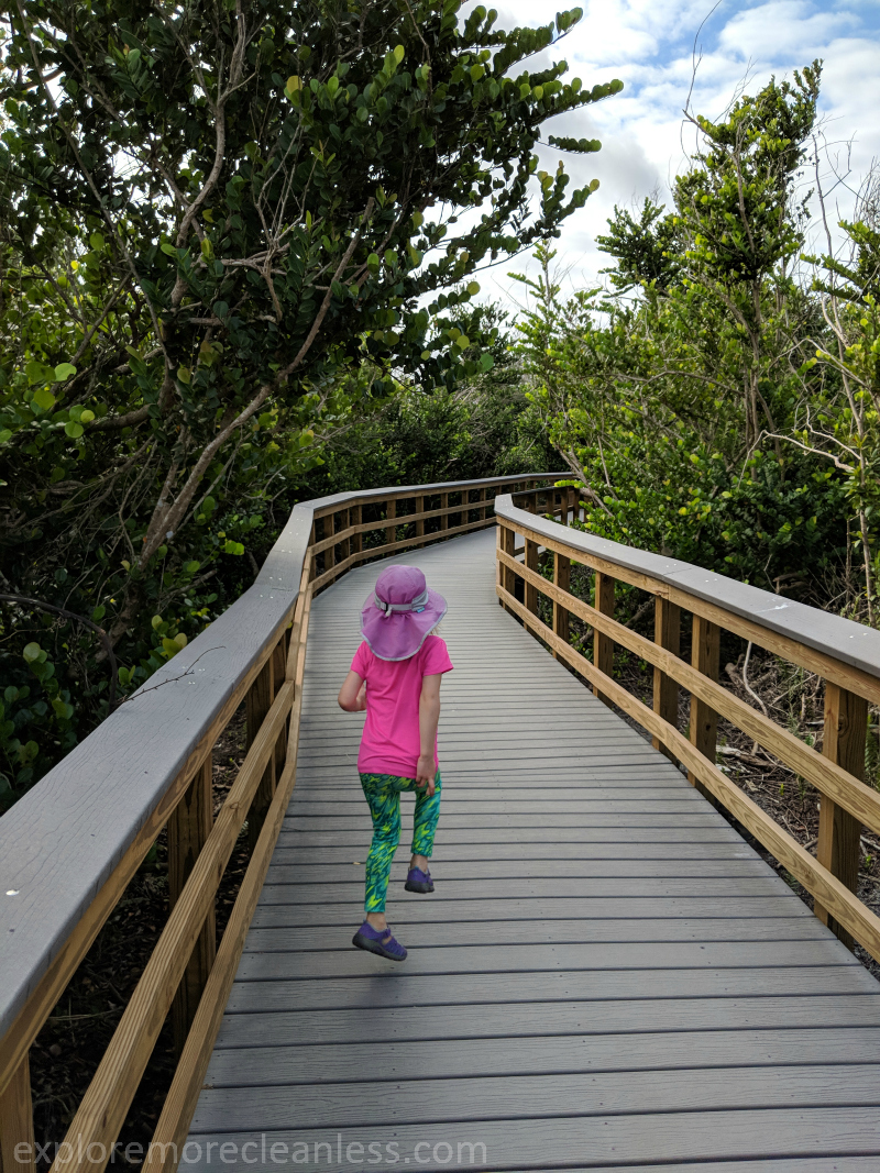 shark valley boardwalk trail everglades