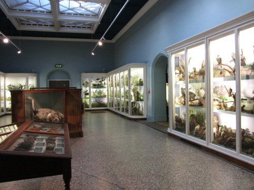 Norwich Castle Museum Art Gallery And Natural History Spectacle