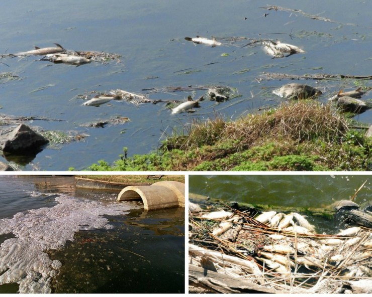Vaal River Pollution