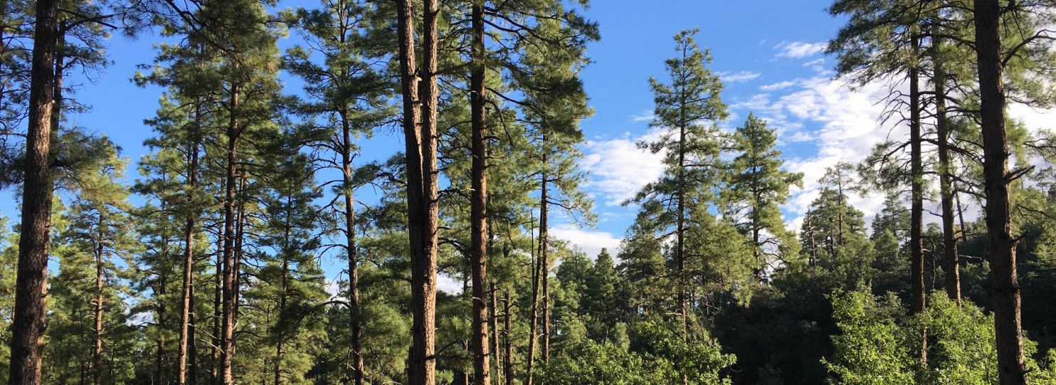 Goldwater Lake to White Spar Campground Hike in Prescott Arizona National Forest