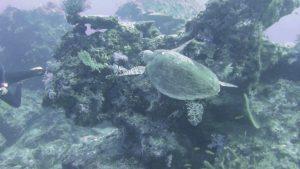 Underwater Turtle in Thailand