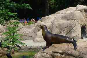Sea Lion New York
