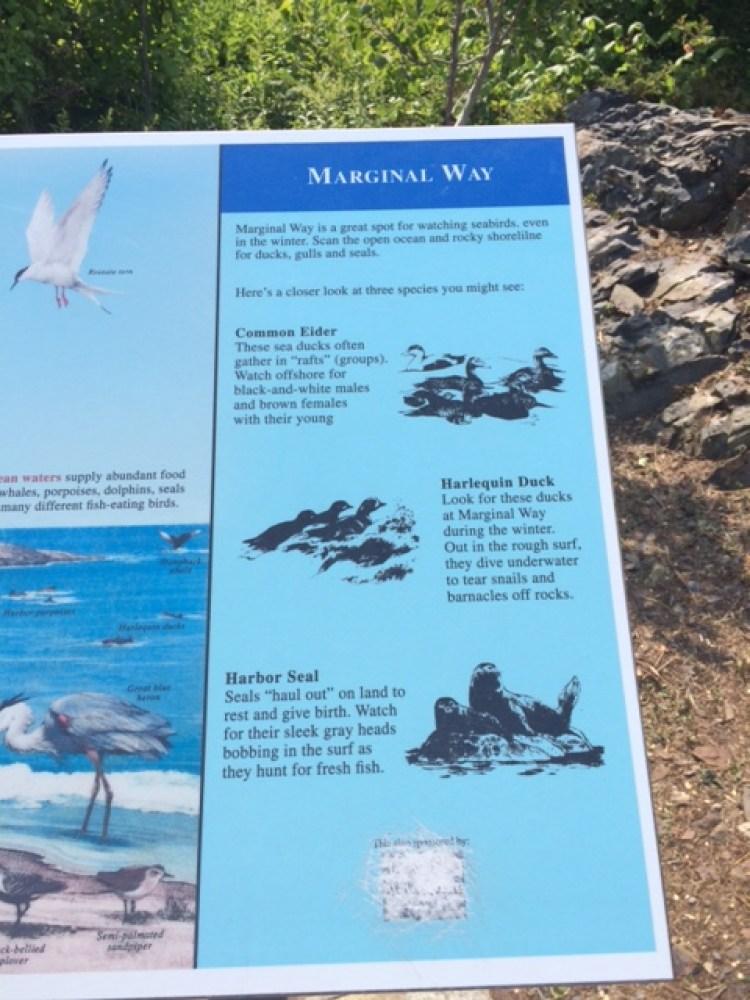Marginal Way