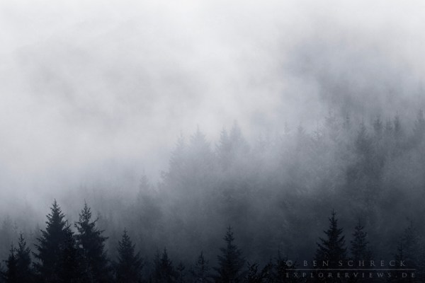 Wald nach einem Regenschauer