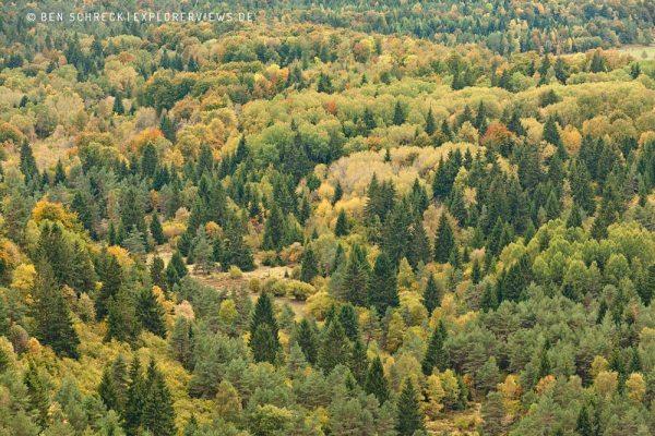 Wald im Herbst Auvergne 2280
