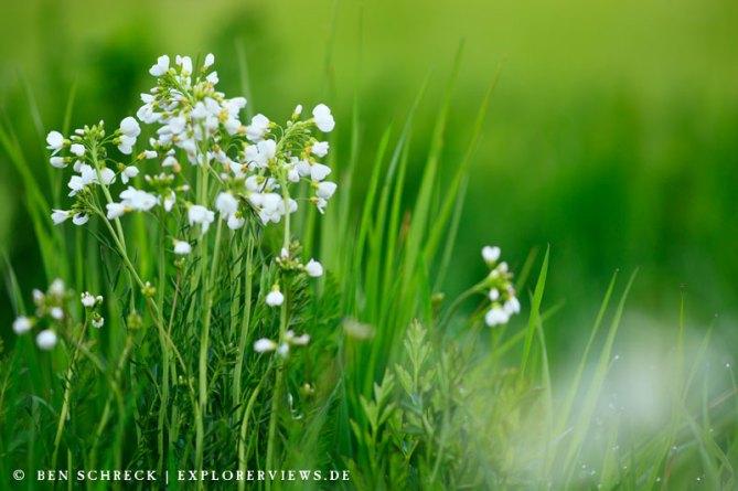 Blumen Wiese