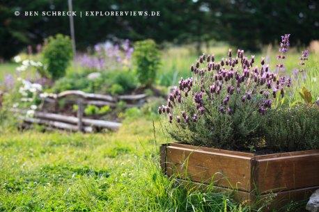 Jardin Armorique Lavande
