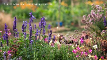 Kräuter Garten Blumen