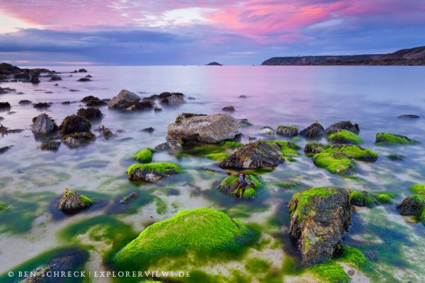 Algen im Sonnenuntergang