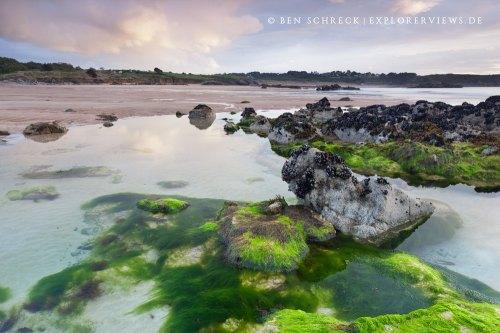 Unterwasserwelt Frehel Bretagne