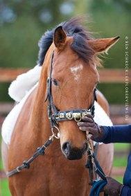 Junges Pferd Ausbildung