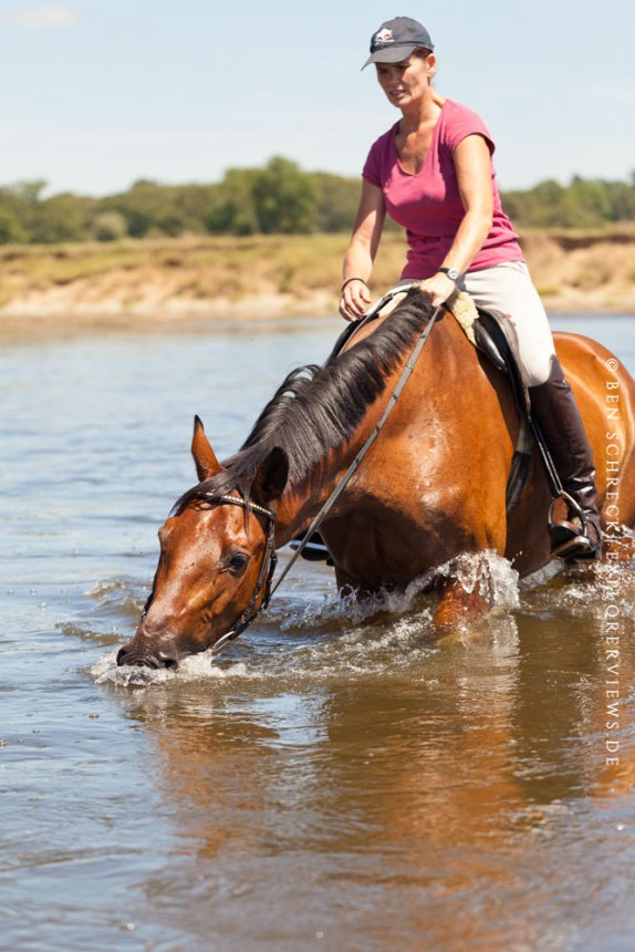 Pferd Wassertraining