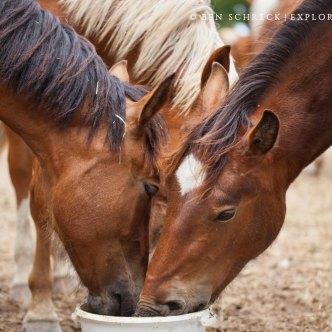 Pferde Futter